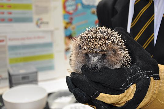 Harold before he was released