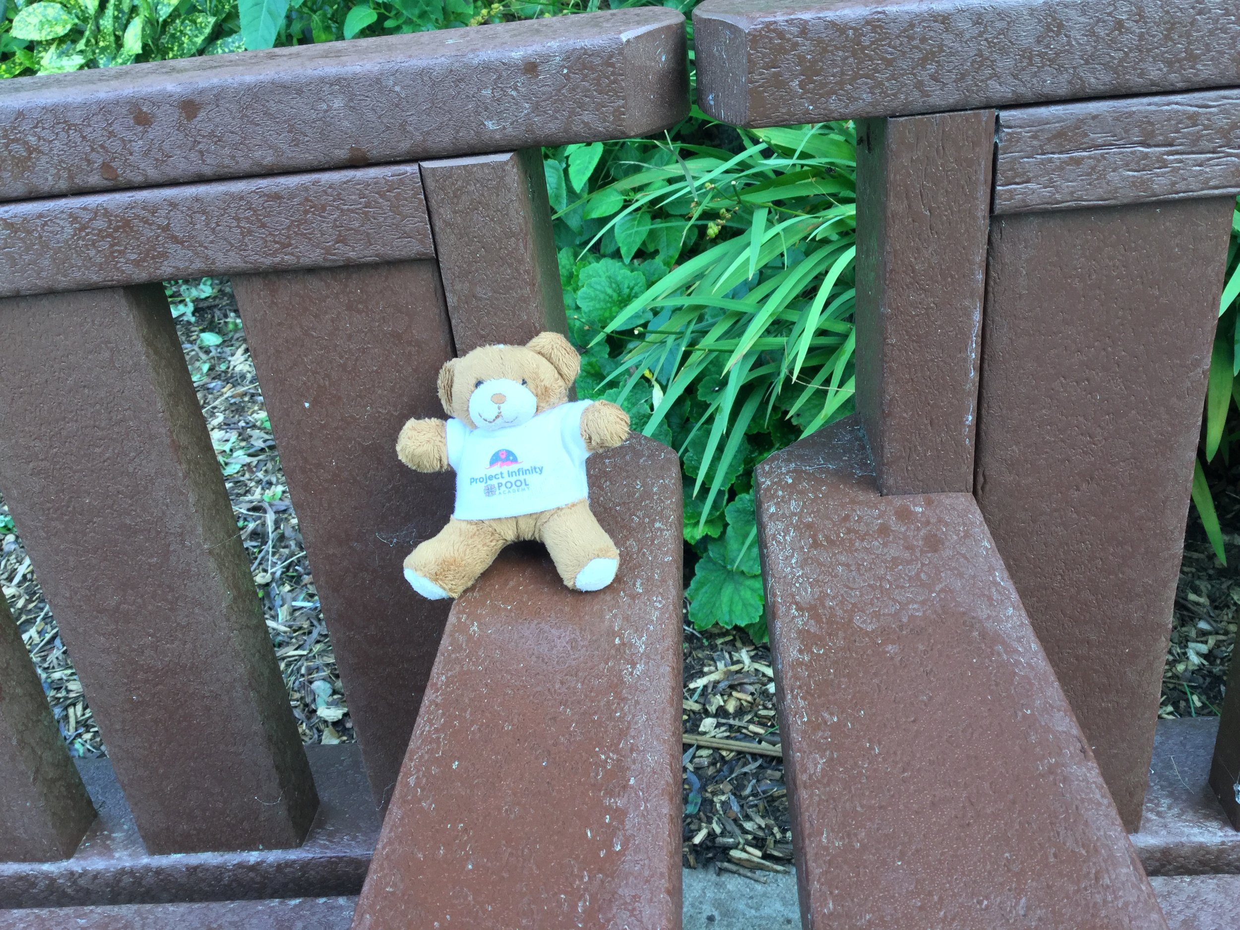 Buzz the Bear taking it easy in the grounds of Pool Academy before Thursday's launch