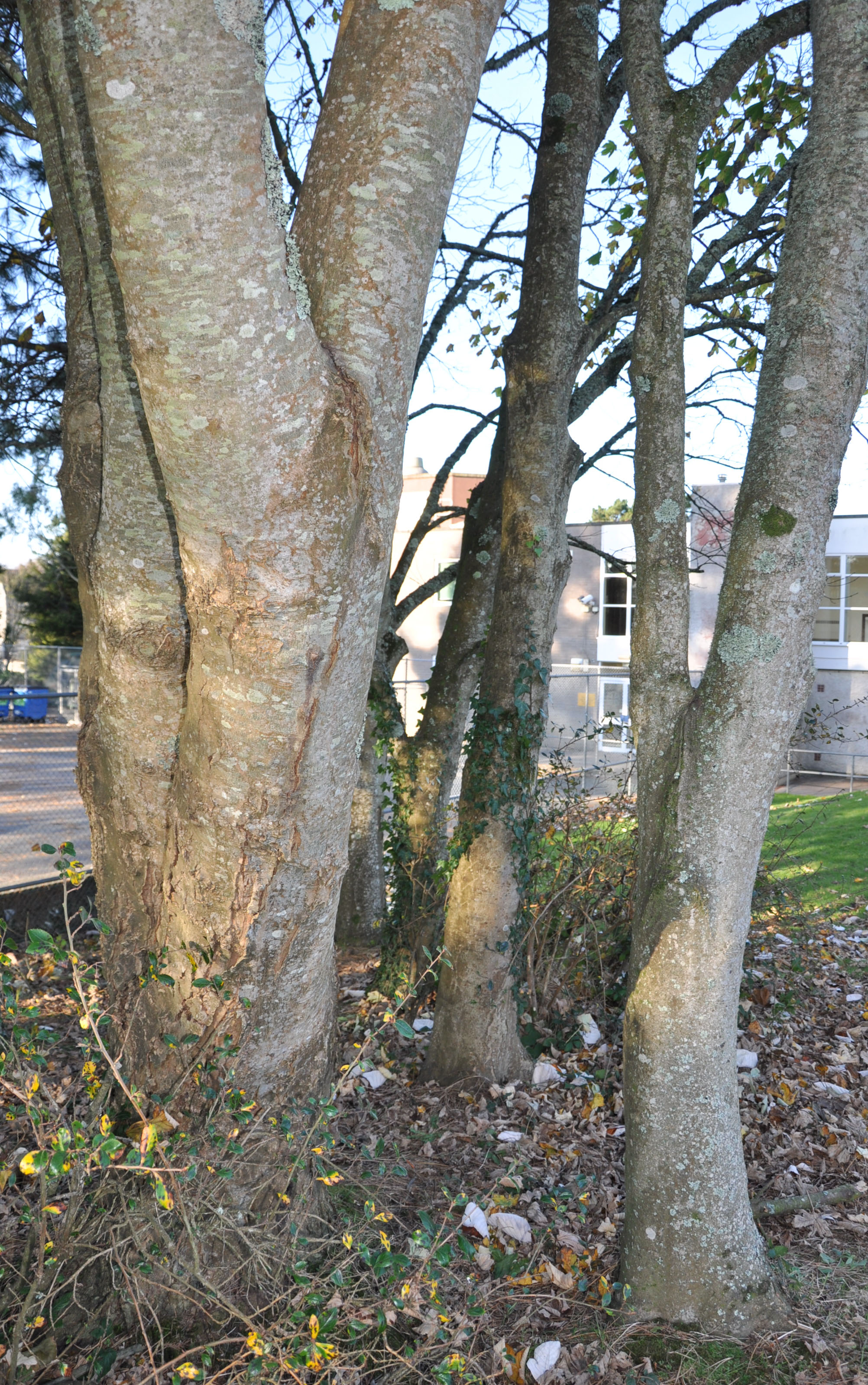 Some of many trees in Pool Academy Grounds.
