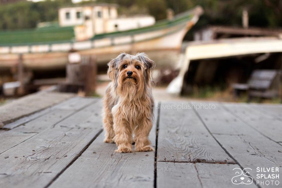terrier_on_boat_dock.jpg