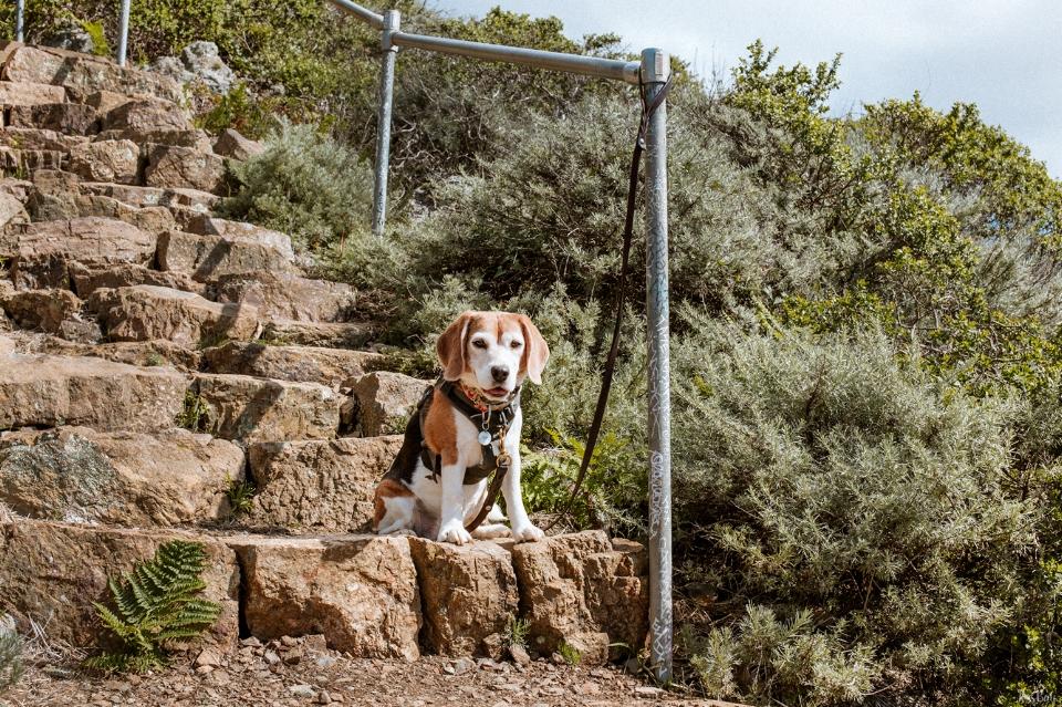 dog-friendly-hikes-marin-headlands.jpg