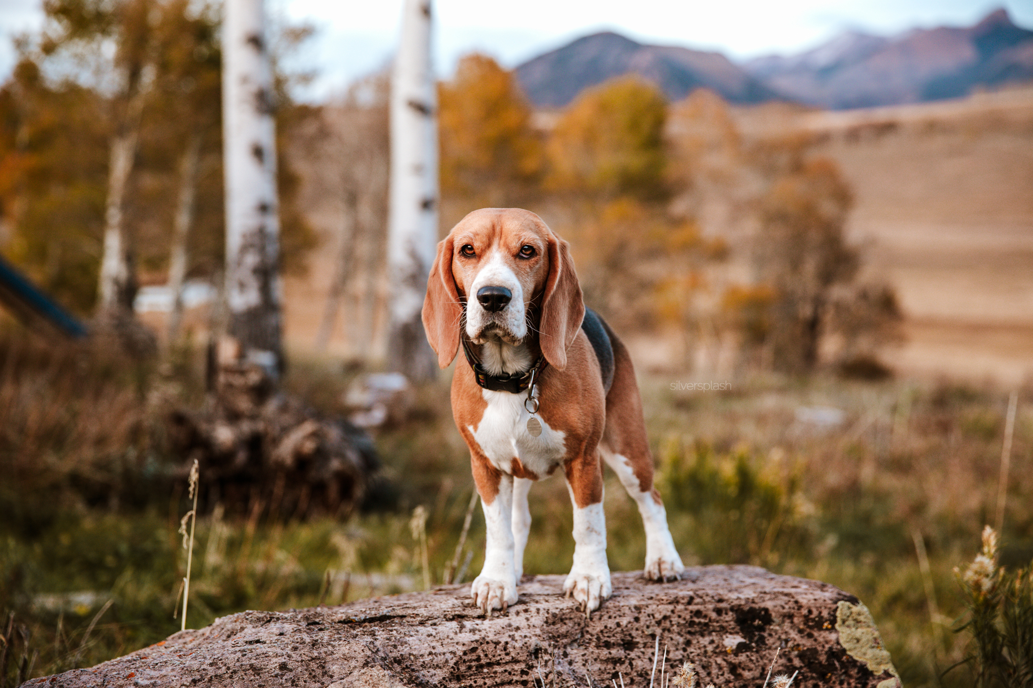 Telluride-colorado-dog-pet-photographer.jpg