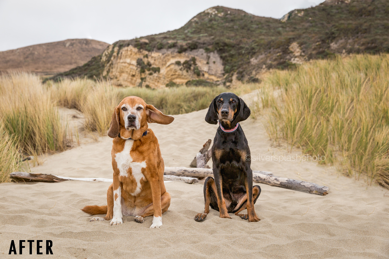 Not to worry, through digital retouching I removed leashes, the owner's legs, and Harley's swapped Harley's closed eyes with her open eyes from another image.