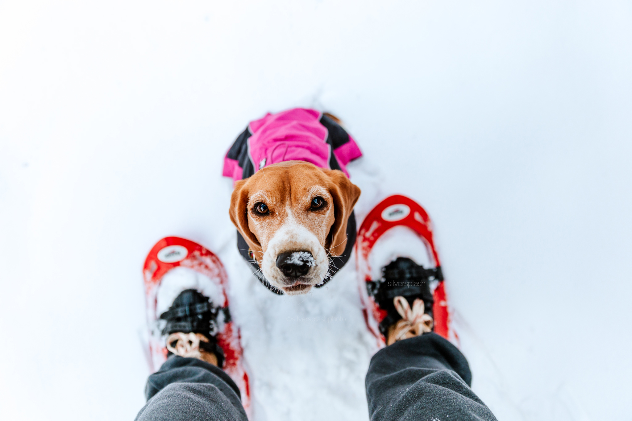 Commercial-pet-photography-snowshoe.jpg