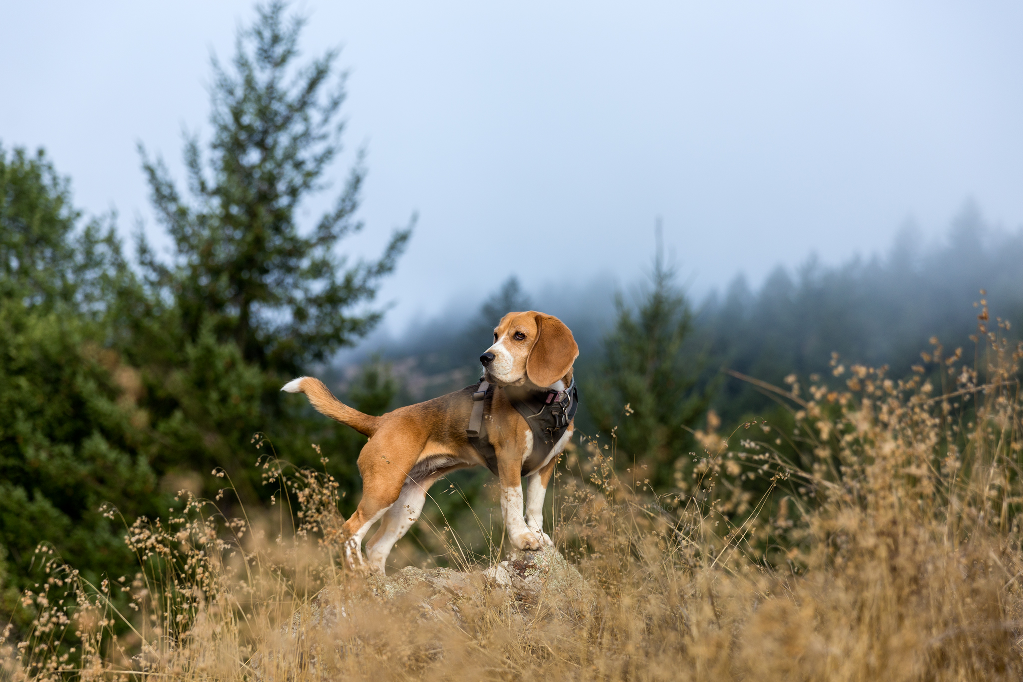 outdoor-lifestyle-dog-professional-photographer.jpg