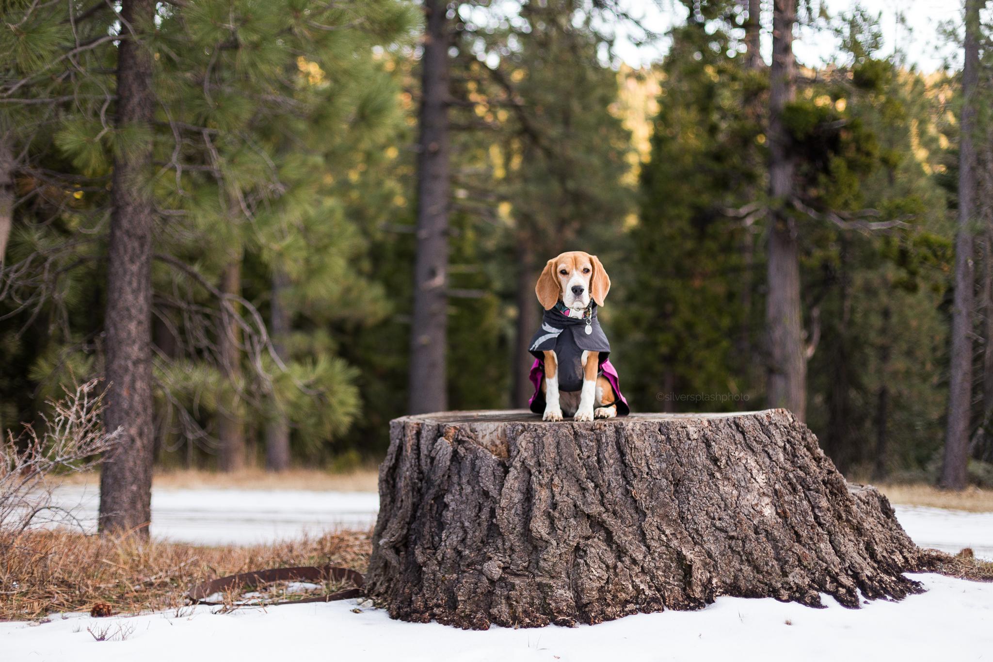 dog-product-photos.jpg