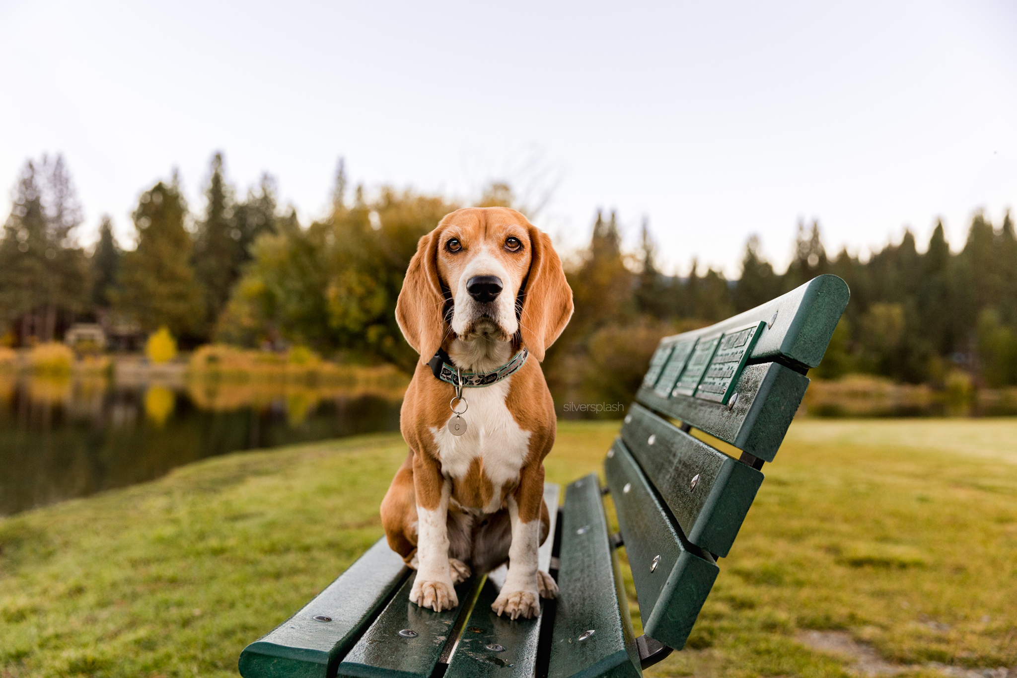pet-photographer-truckee.jpg
