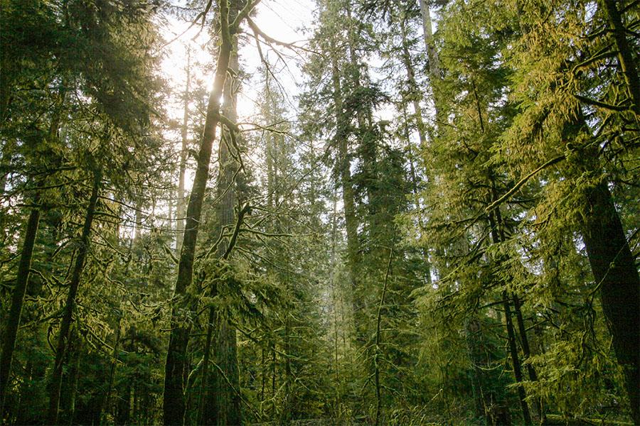 treesreview.jpg