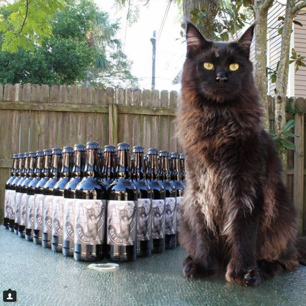 Cat Kong Hidden Springs Bottles
