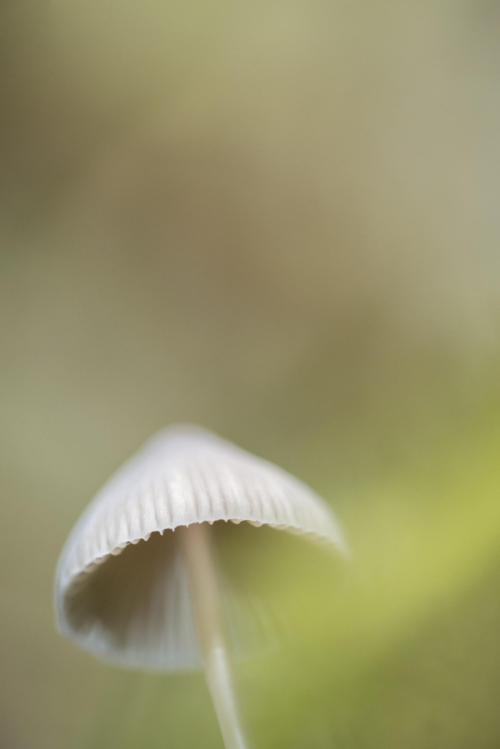Fungi-5.jpg
