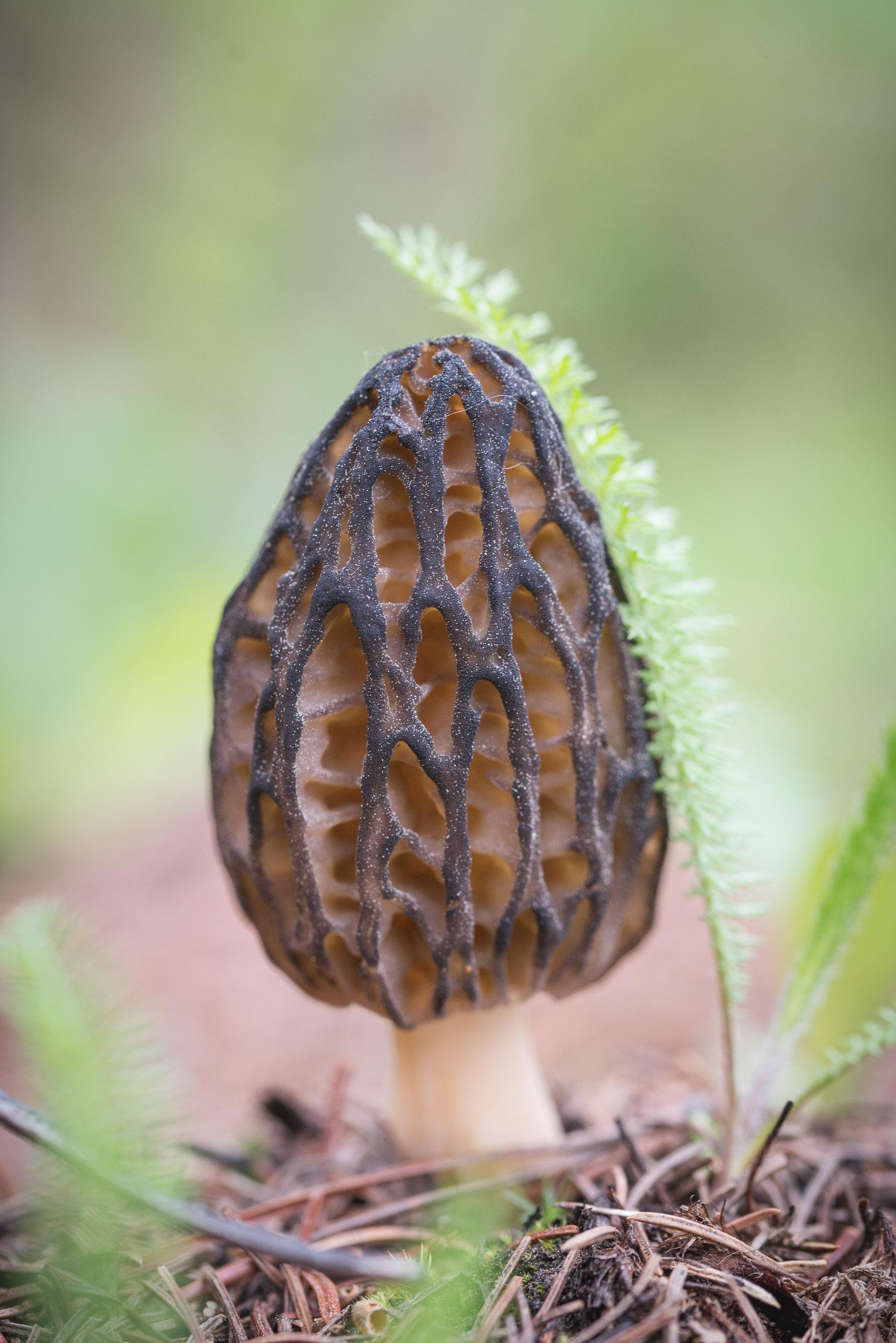Fungi-15.jpg