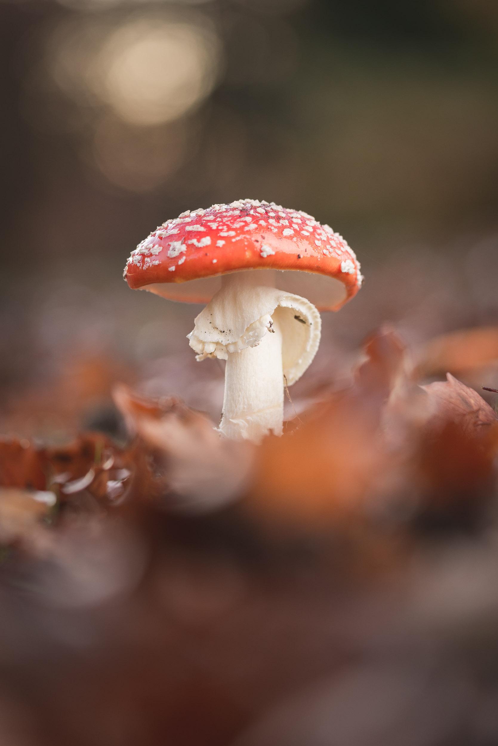 Fungi-32.jpg