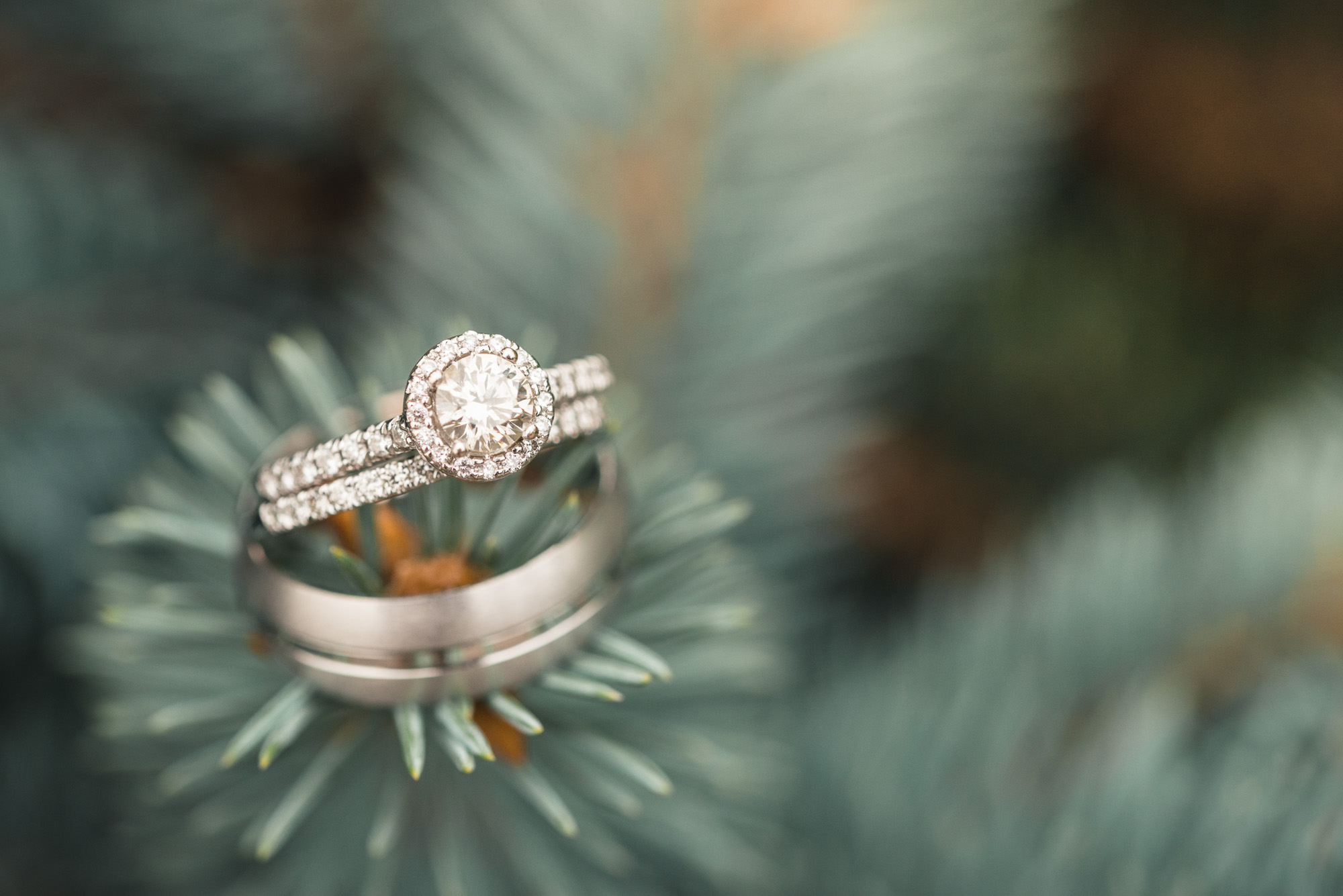White gold ring details on blue spruce