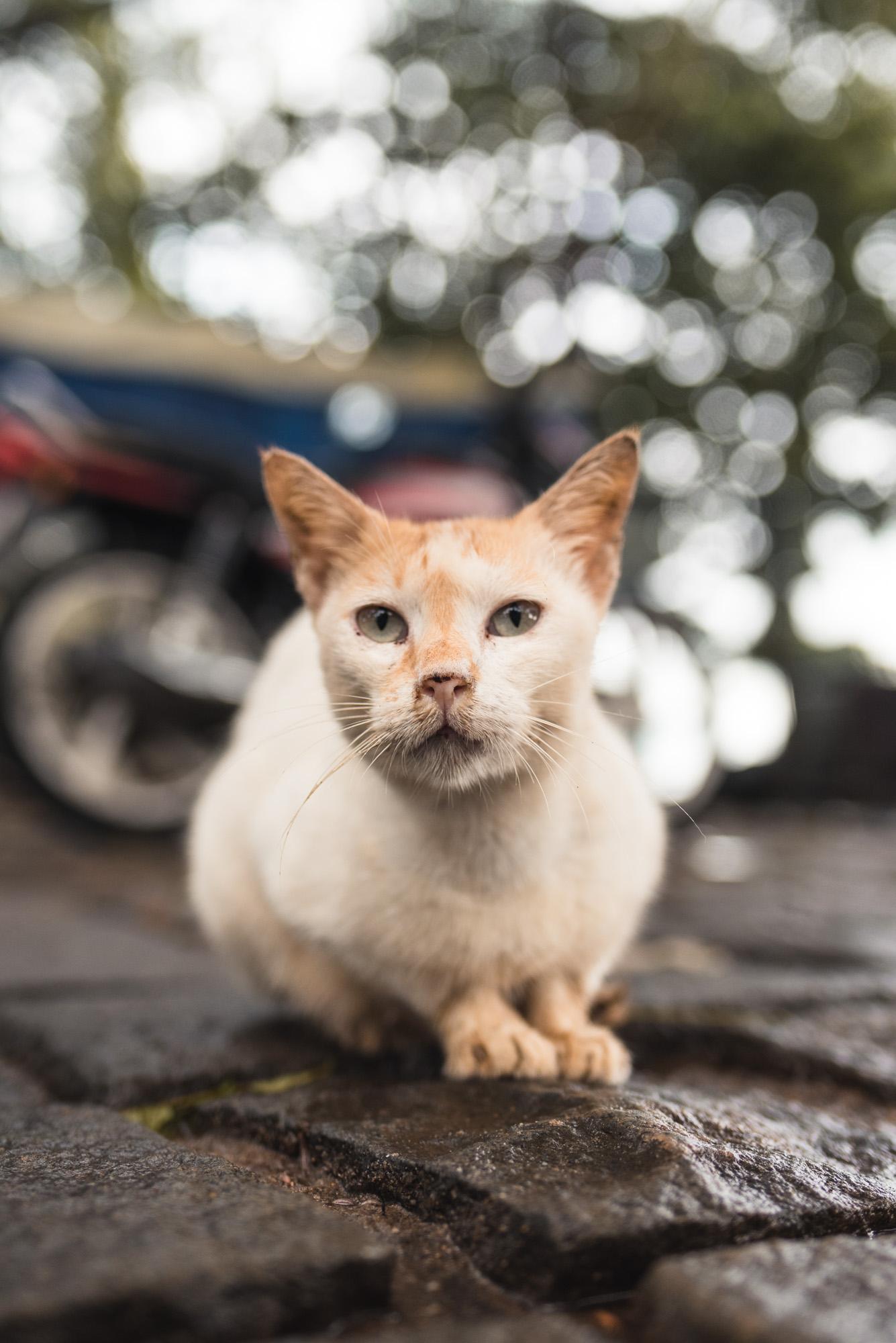 Street cat in Fort Kochi