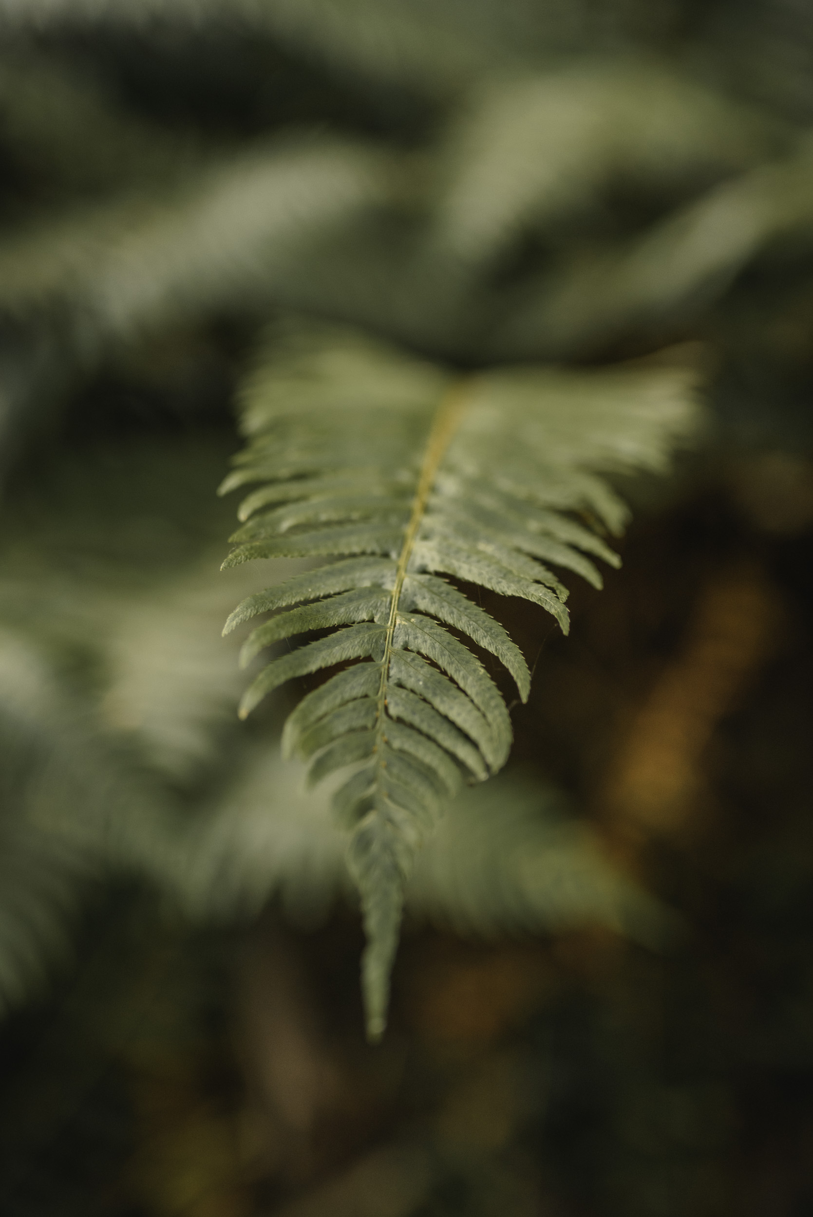 Fern frond on forest floor