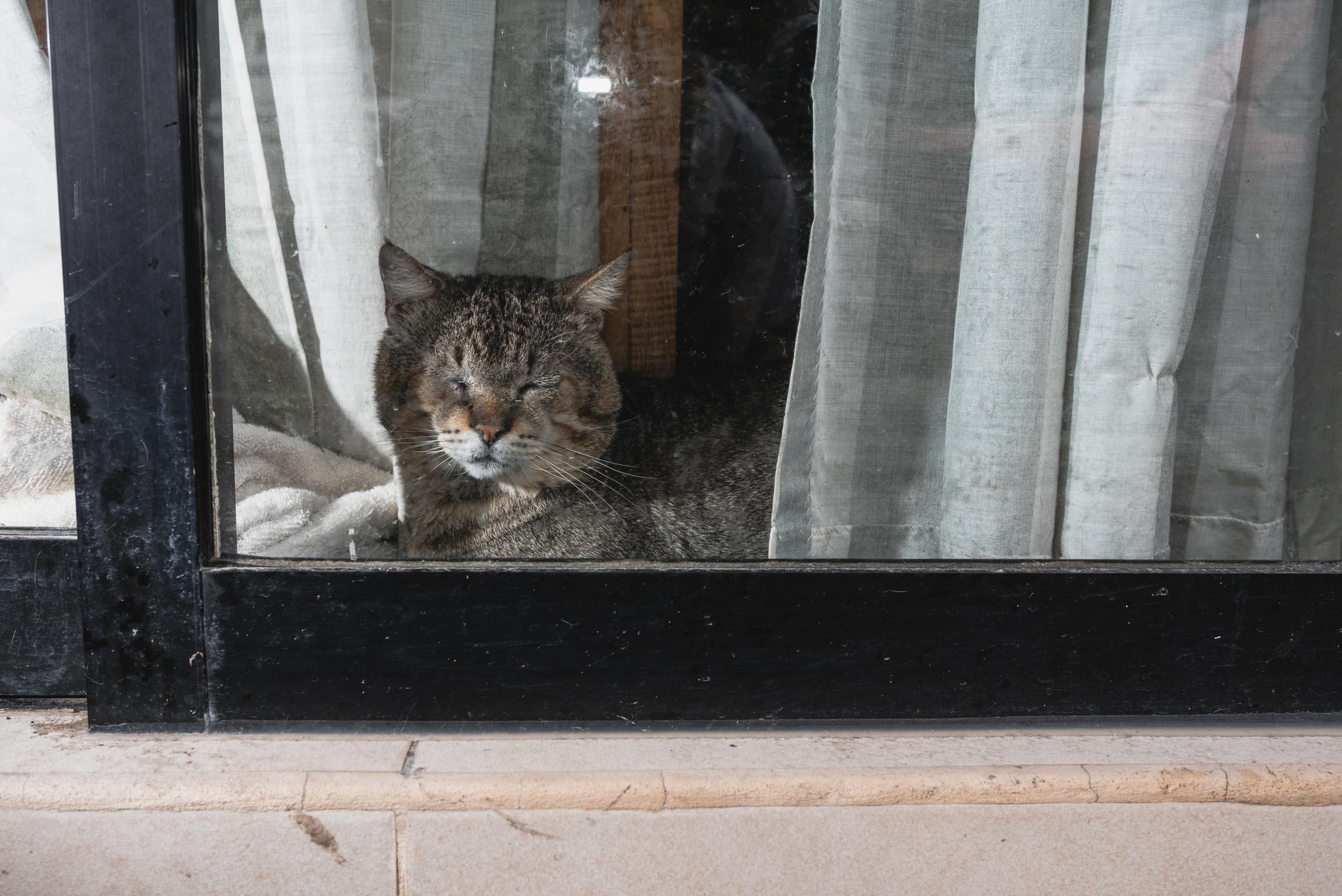 Puerto Vallarta cat in window