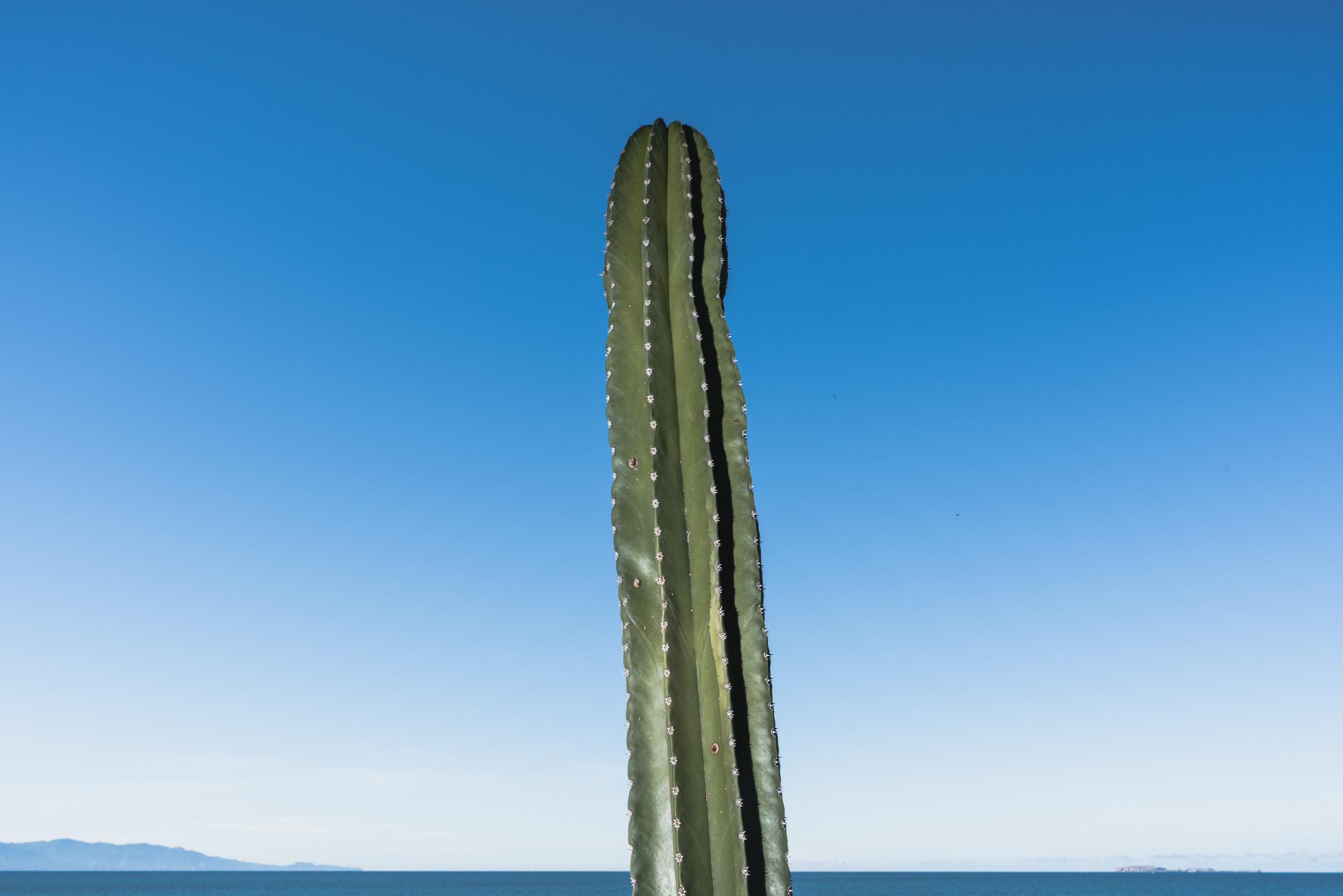 Beach cactus and sky