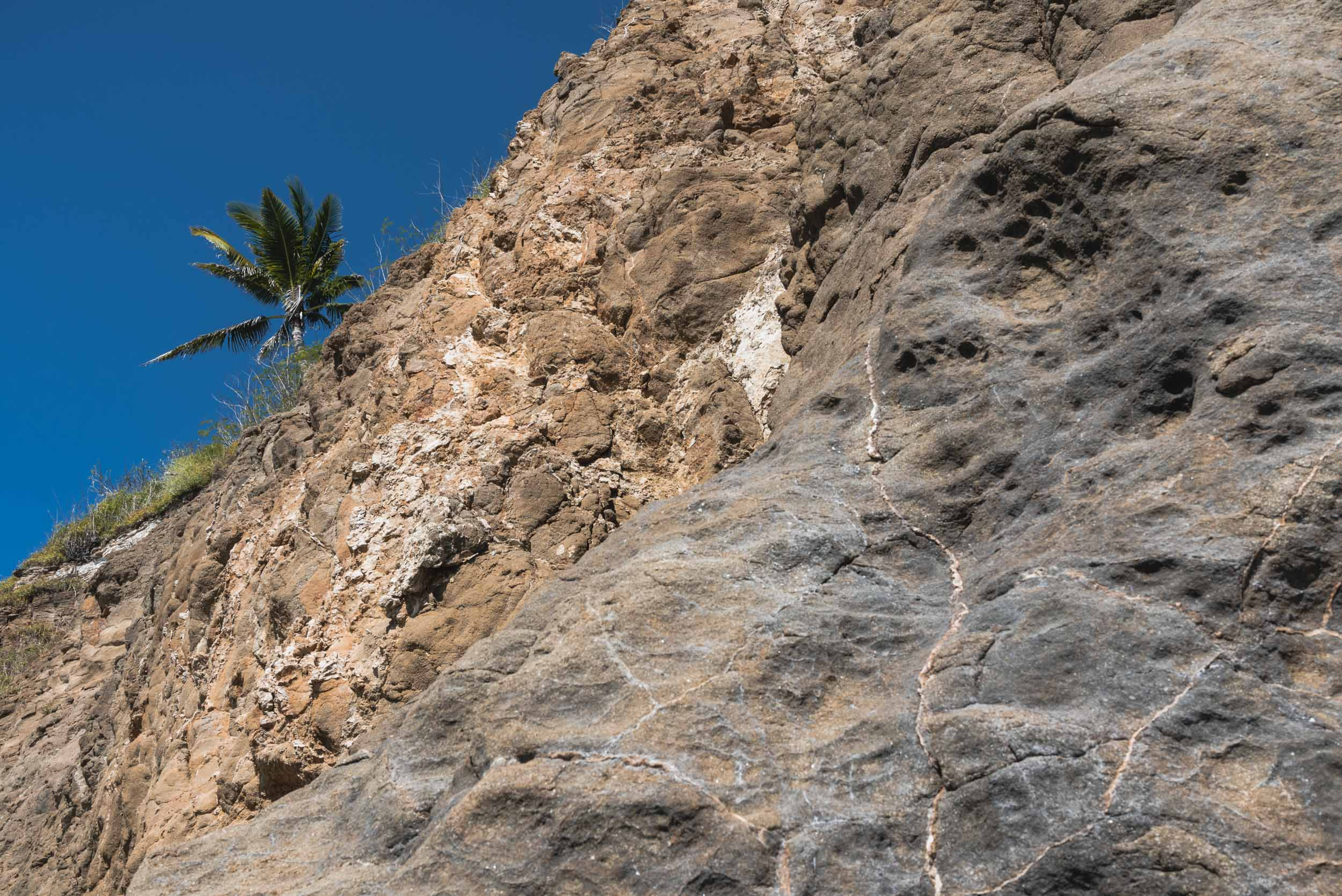 Riviera Nayarit cliff with palm tree