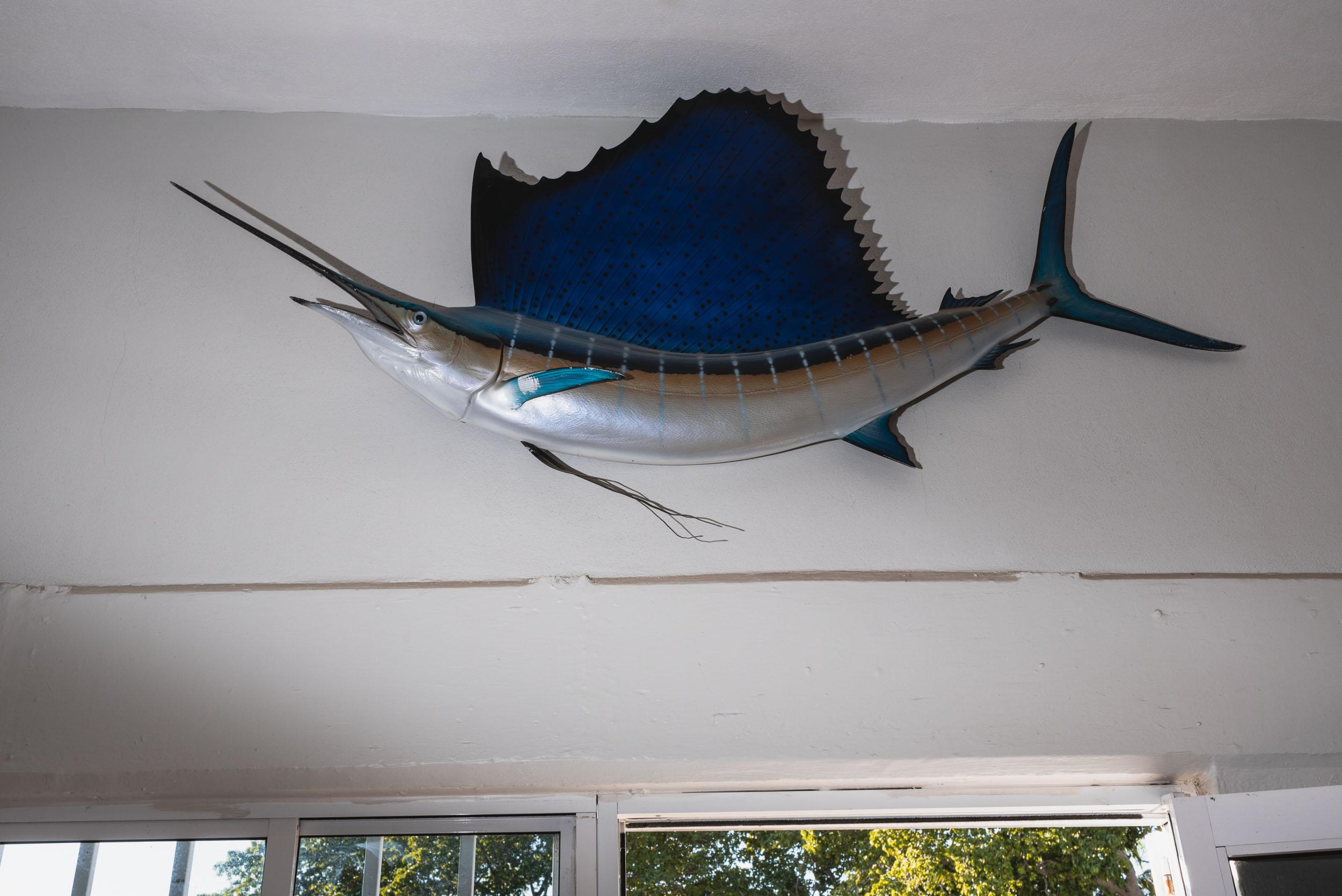 Punta Mita taxidermy marlin