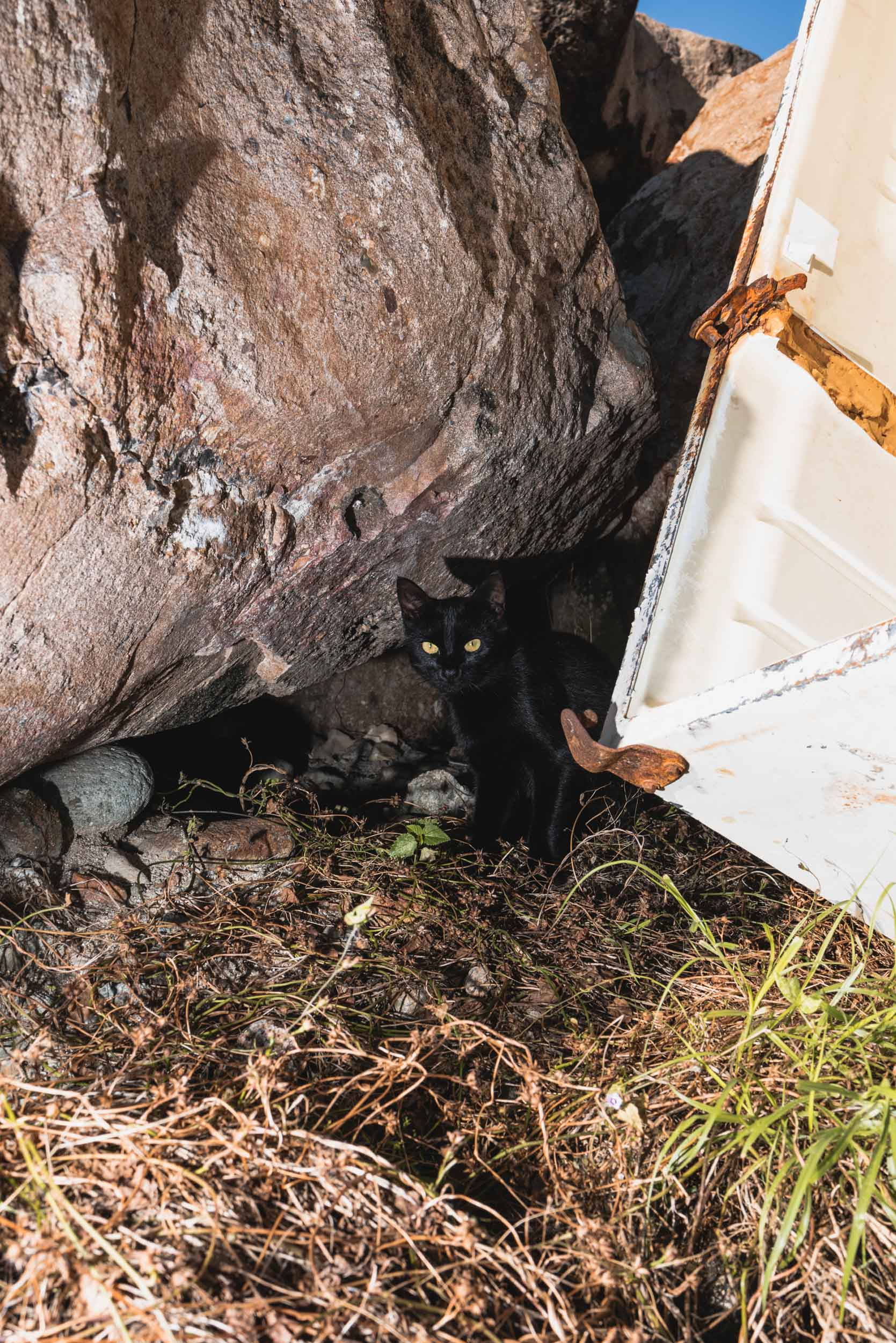 Punta Mita stray cat at beach