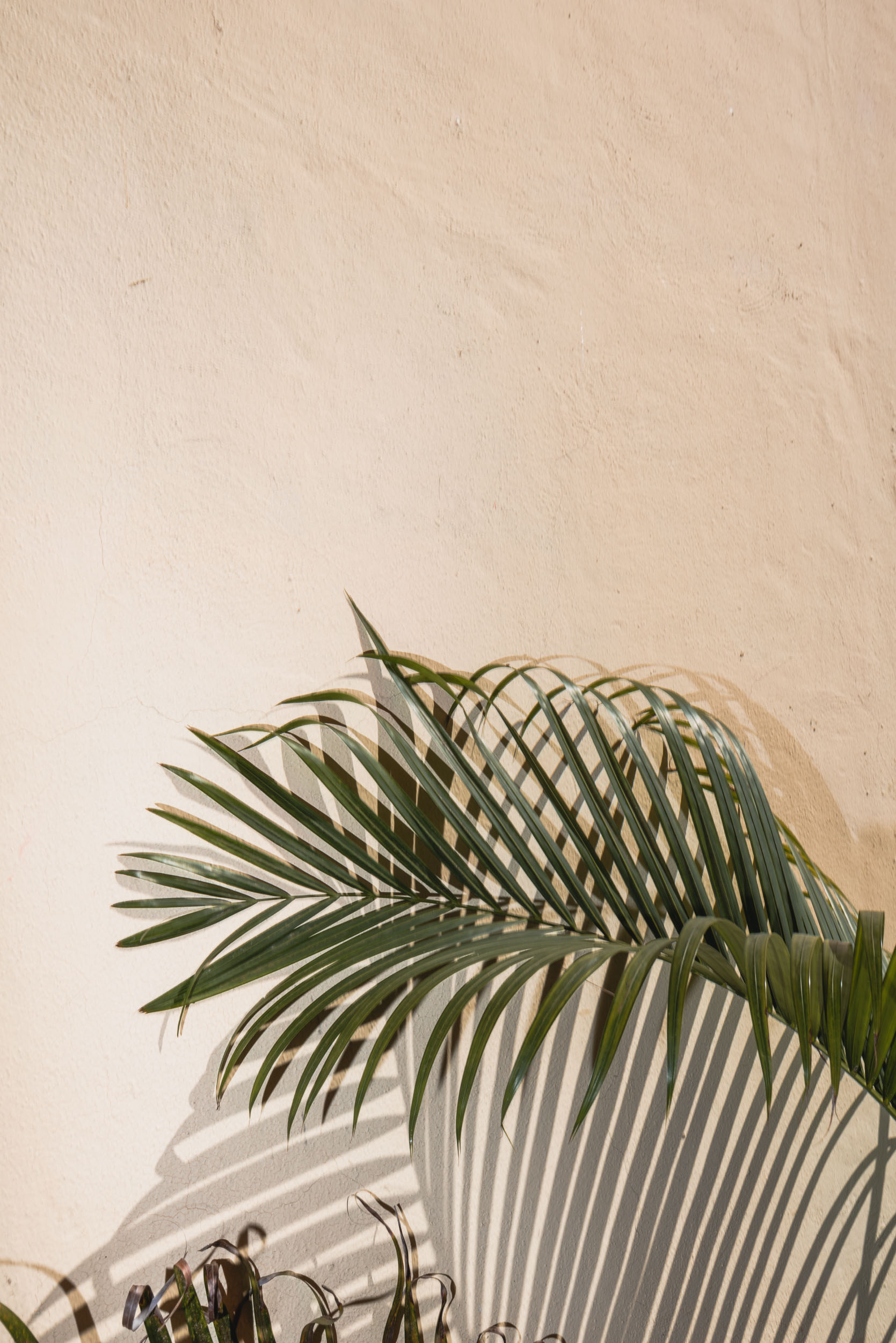 Palm frond against yellow wall