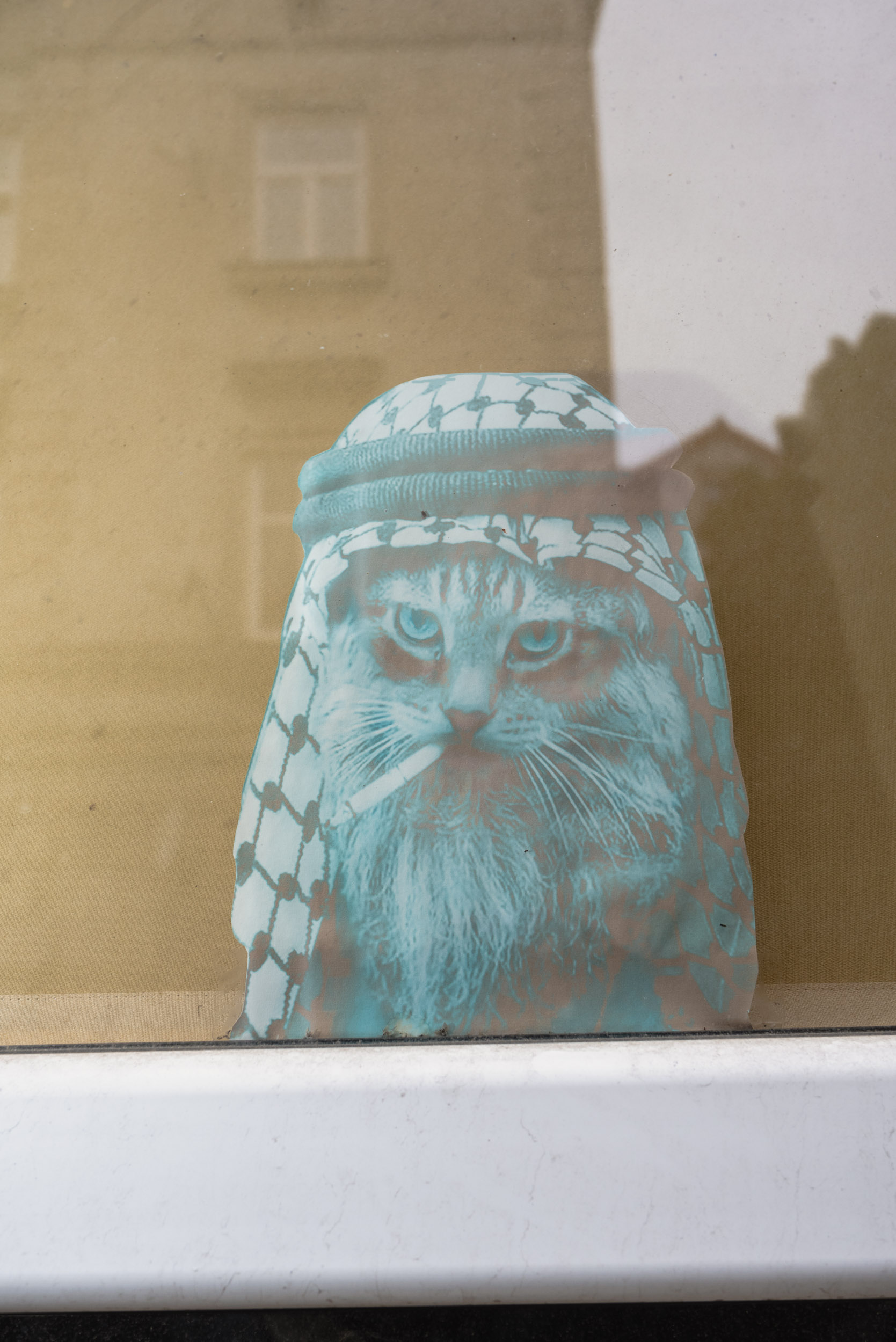 Rastafarian cat sticker in window