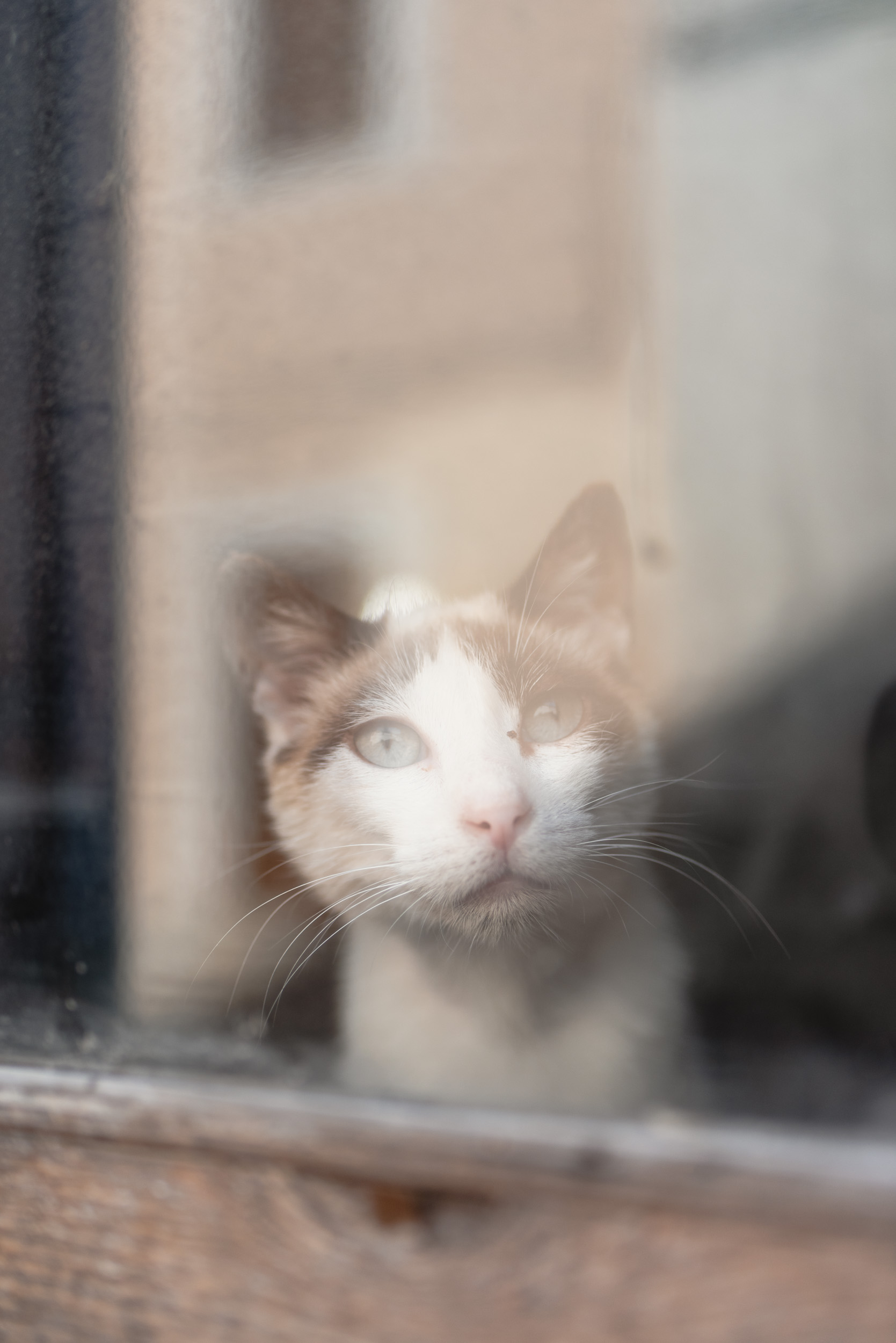 Cat looking through window in Banyalbufar, Spain