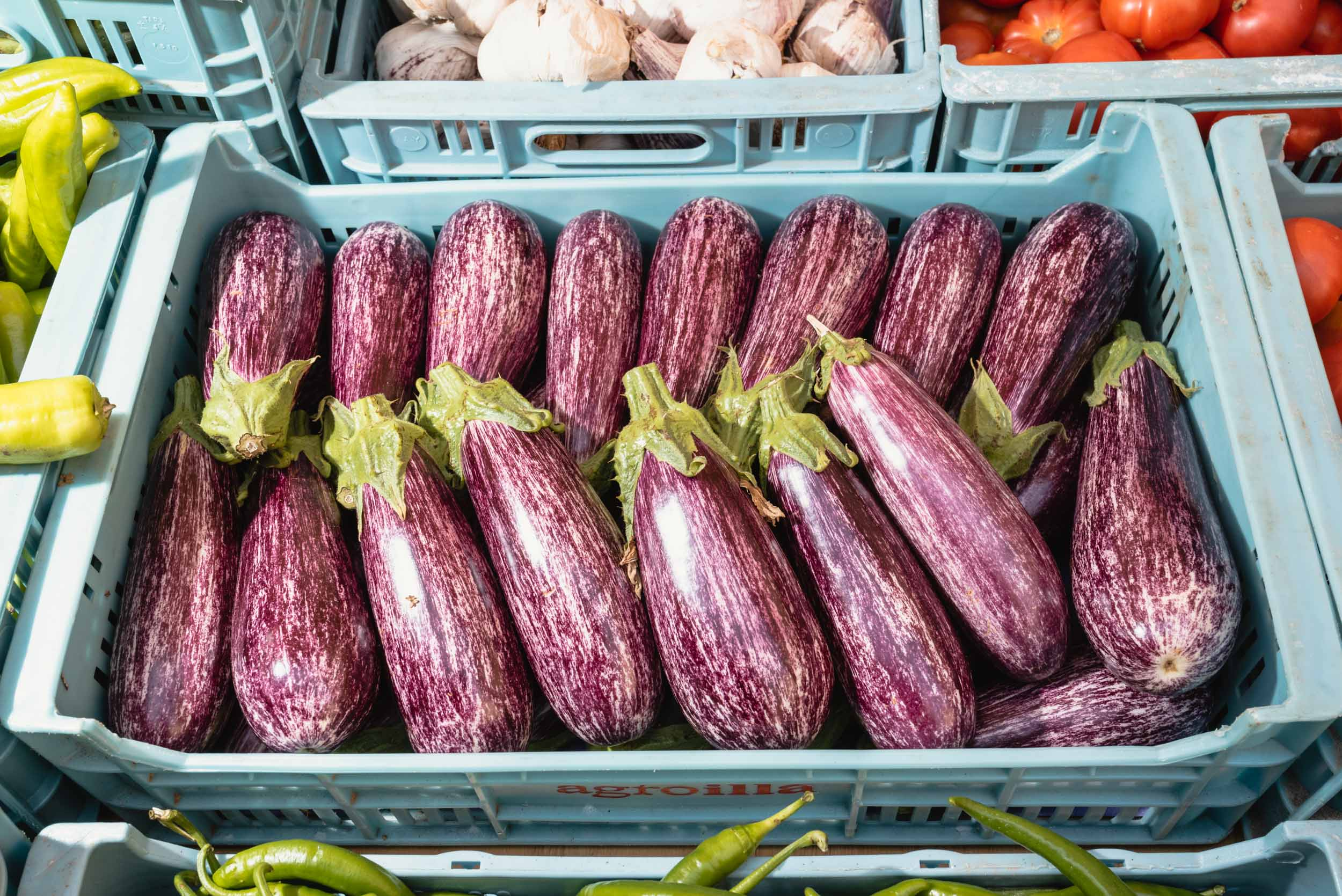 Purple eggplants for sale in Sineu, Spain