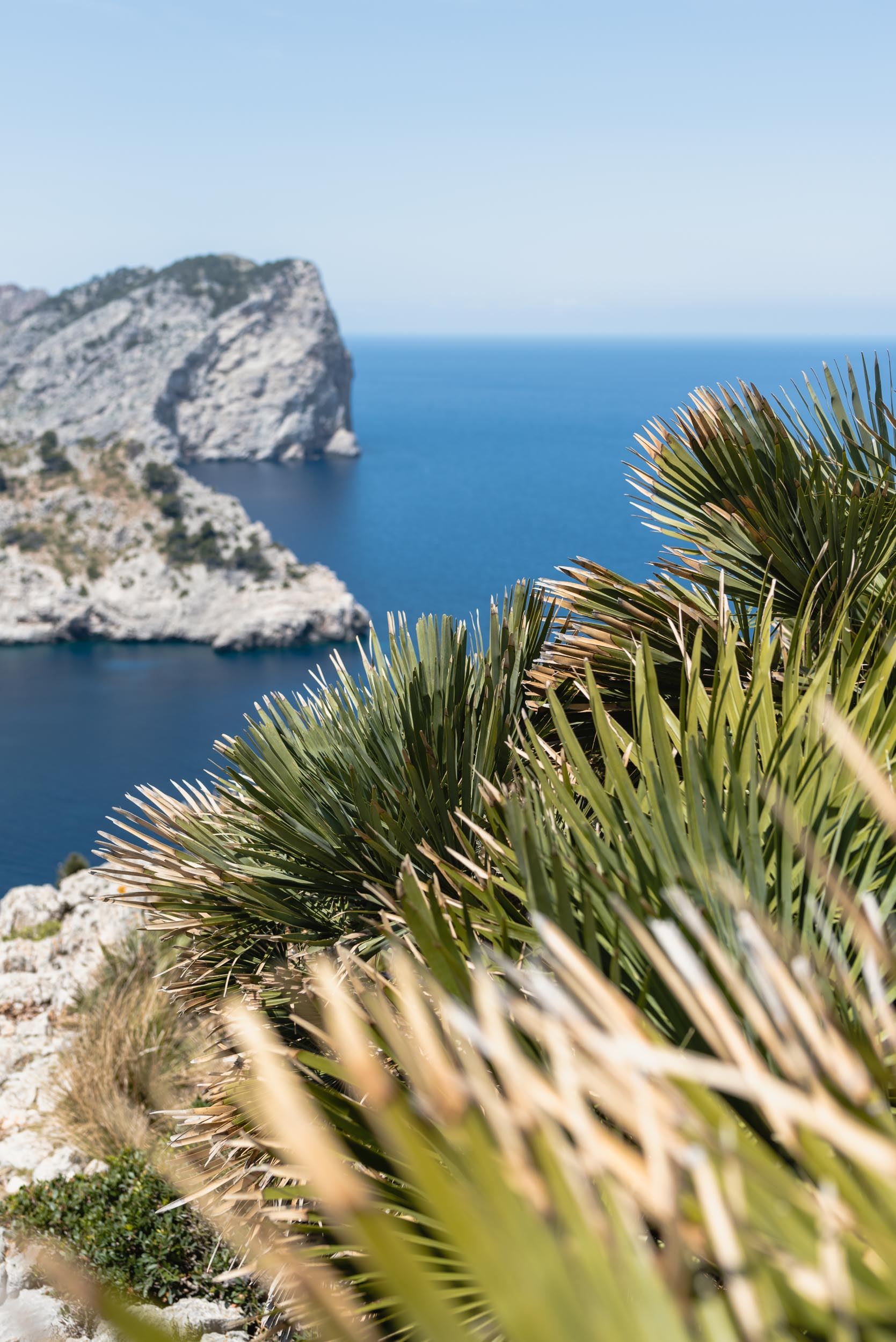 Mirador lookout Mallorca with palm grass