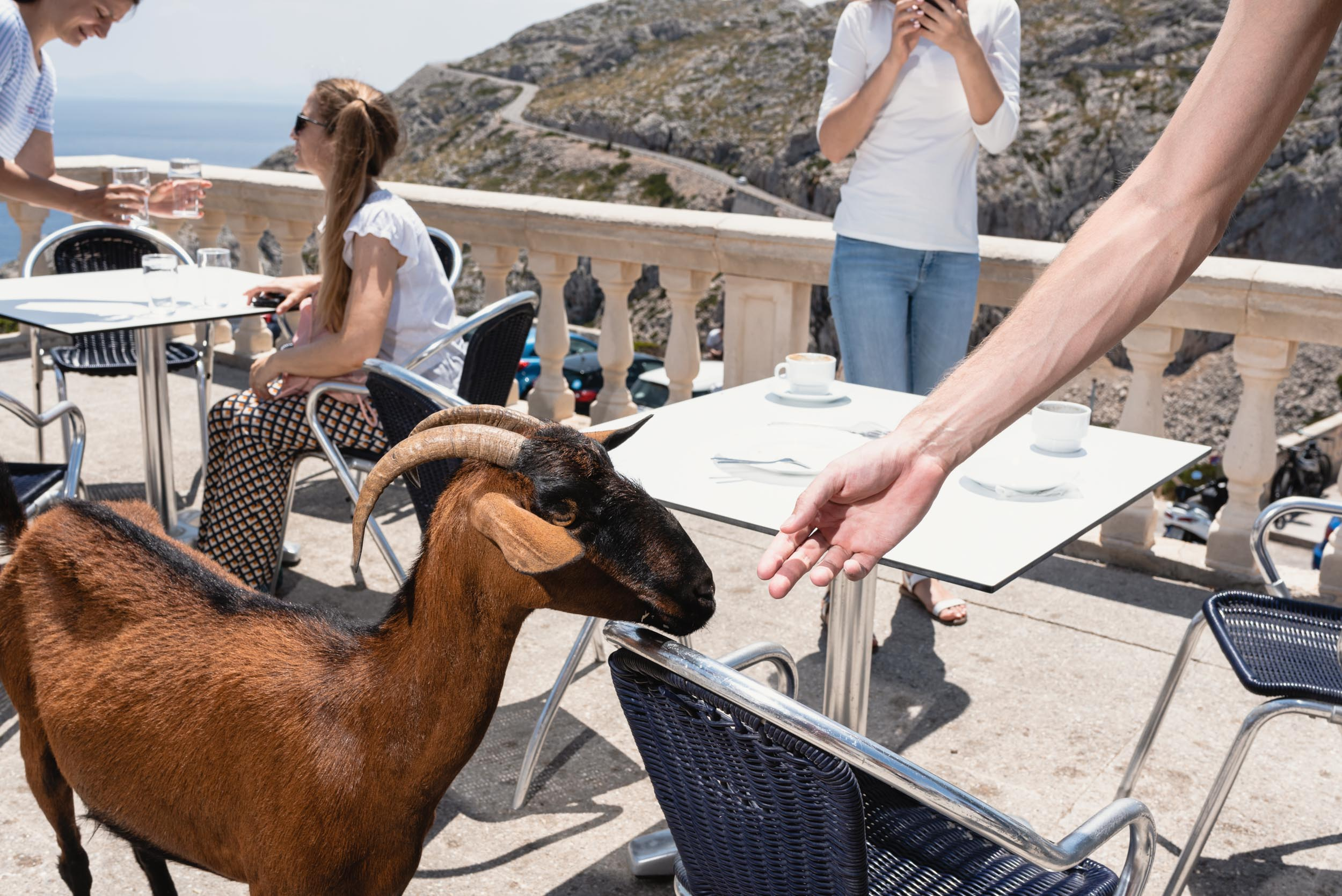 Goat at restaurant patio Torre De Paradis