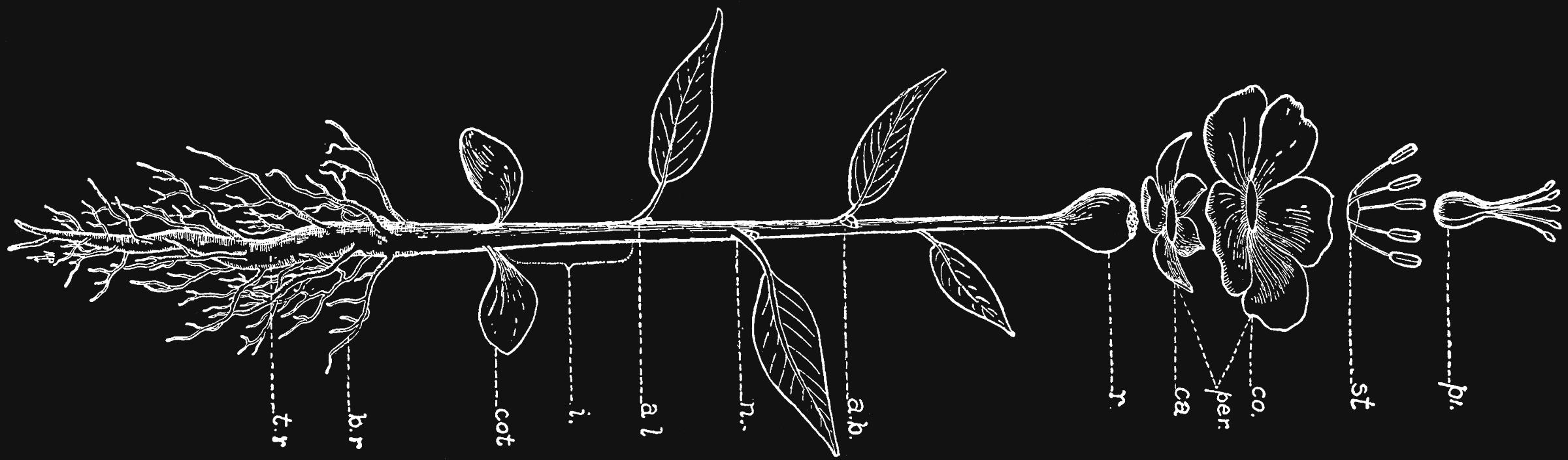 CultivateDiagram