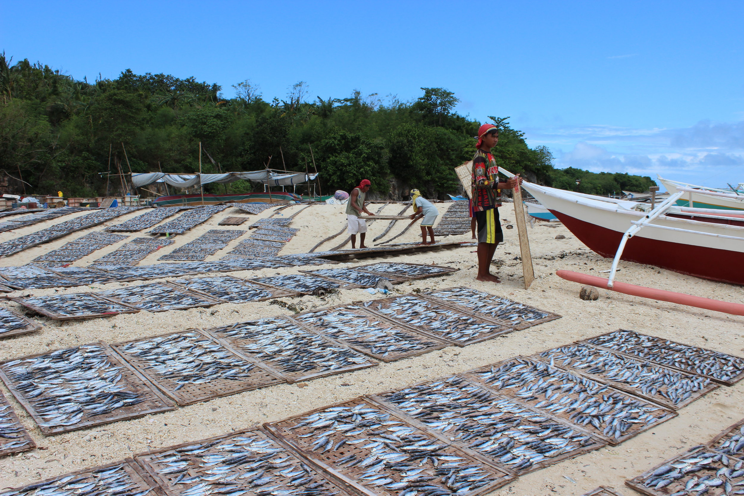 95% of Gibitngil Islet residents earn their livelihoods by fishing. These fish are being dried in the sun for later sale.