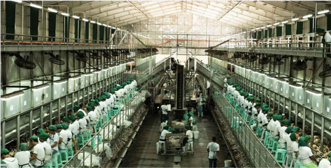 Large scale coconut processing facility
