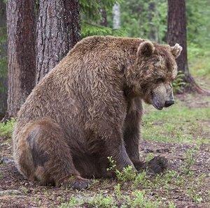 bear-1374487_640.jpg