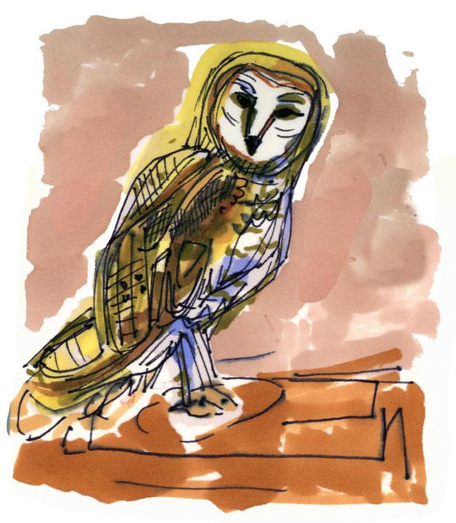 Illustrations by  Lindsey Frances