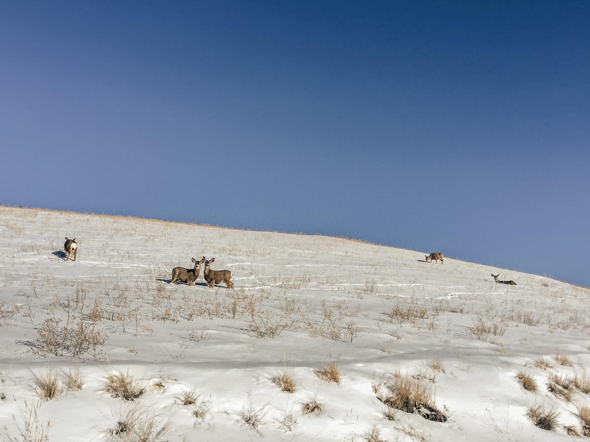 Lost Sapphire Ranch