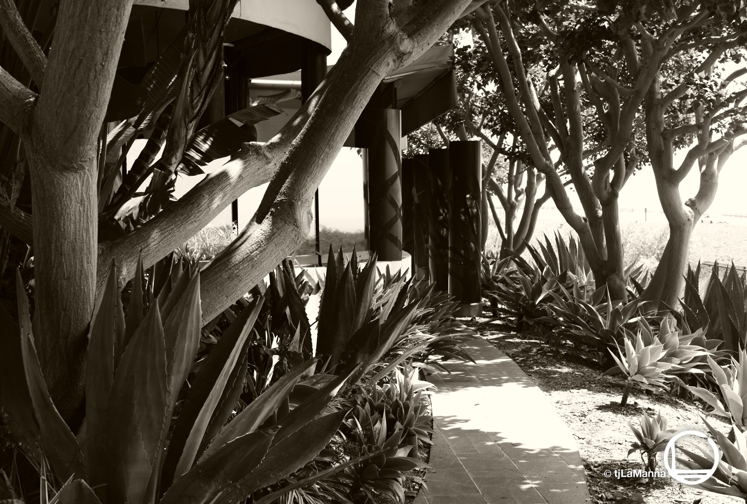 Javier's at Crystal Cove  : :