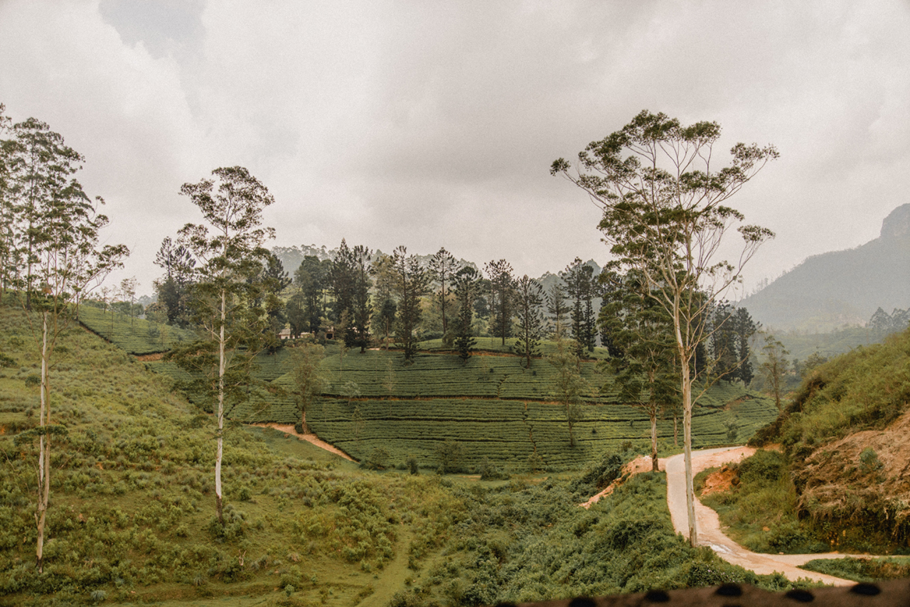 View from the train between Kandy and Ella.