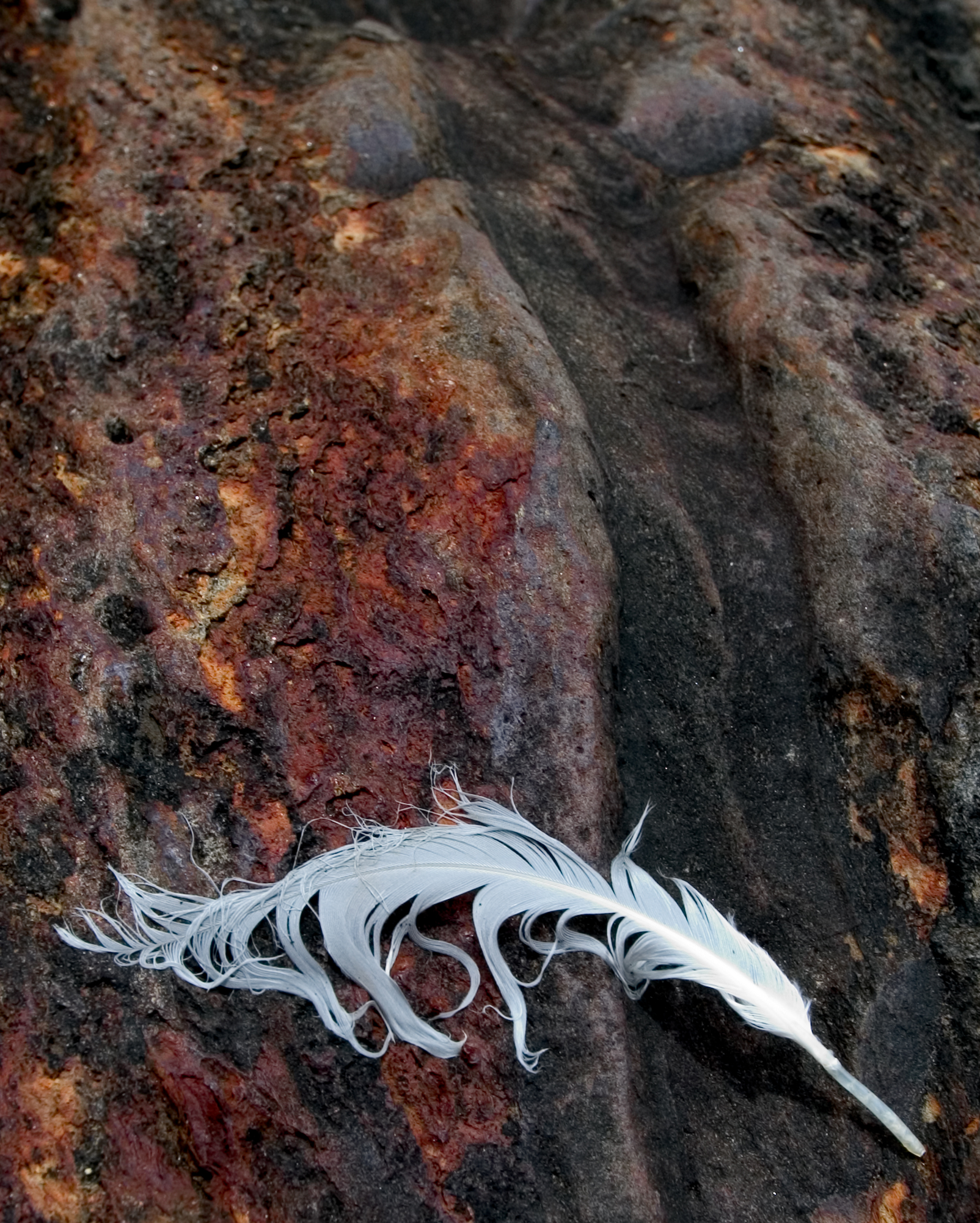 feather on rock.jpg