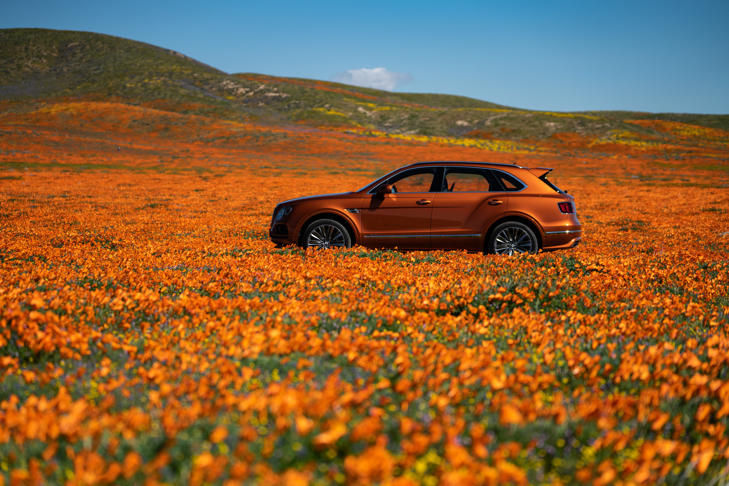 Bentley Bentayga Speed, amid the Poppies of the Antelope Valley