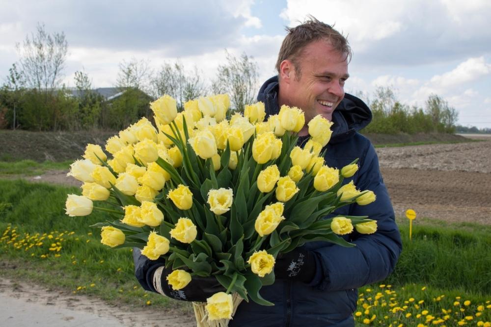 bloomon Rebel Yellow Tulip Field-9044.jpg