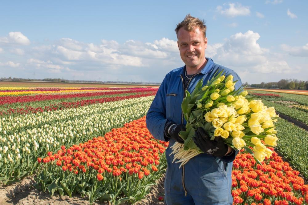 bloomon Rebel Yellow Tulip Field-9302.jpg