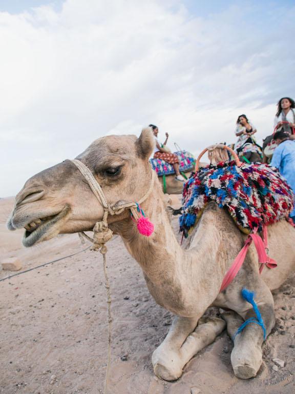 Marrakech-Camel-Ride-6.jpg