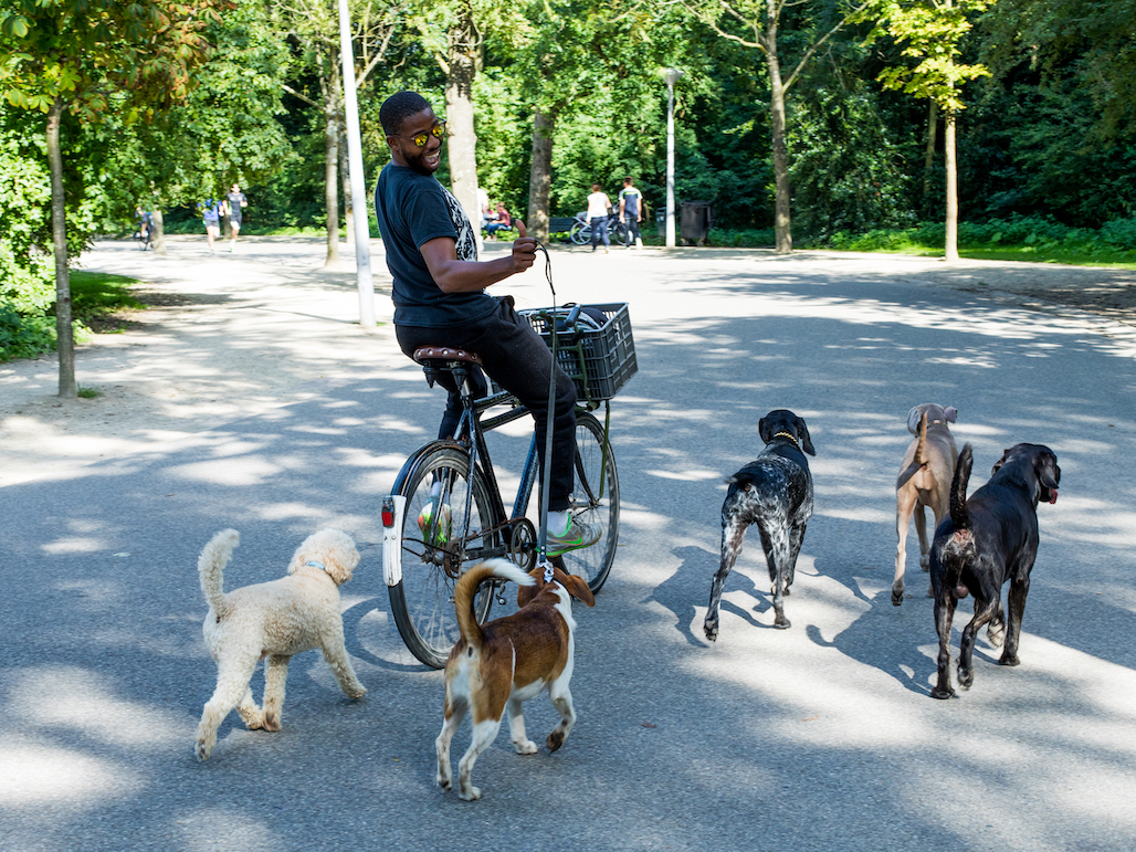 Zuid Vondelpark Cyclist with dogs © Lily Heaton.jpg
