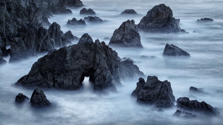 Sea Arch and Gull, Bodega Head