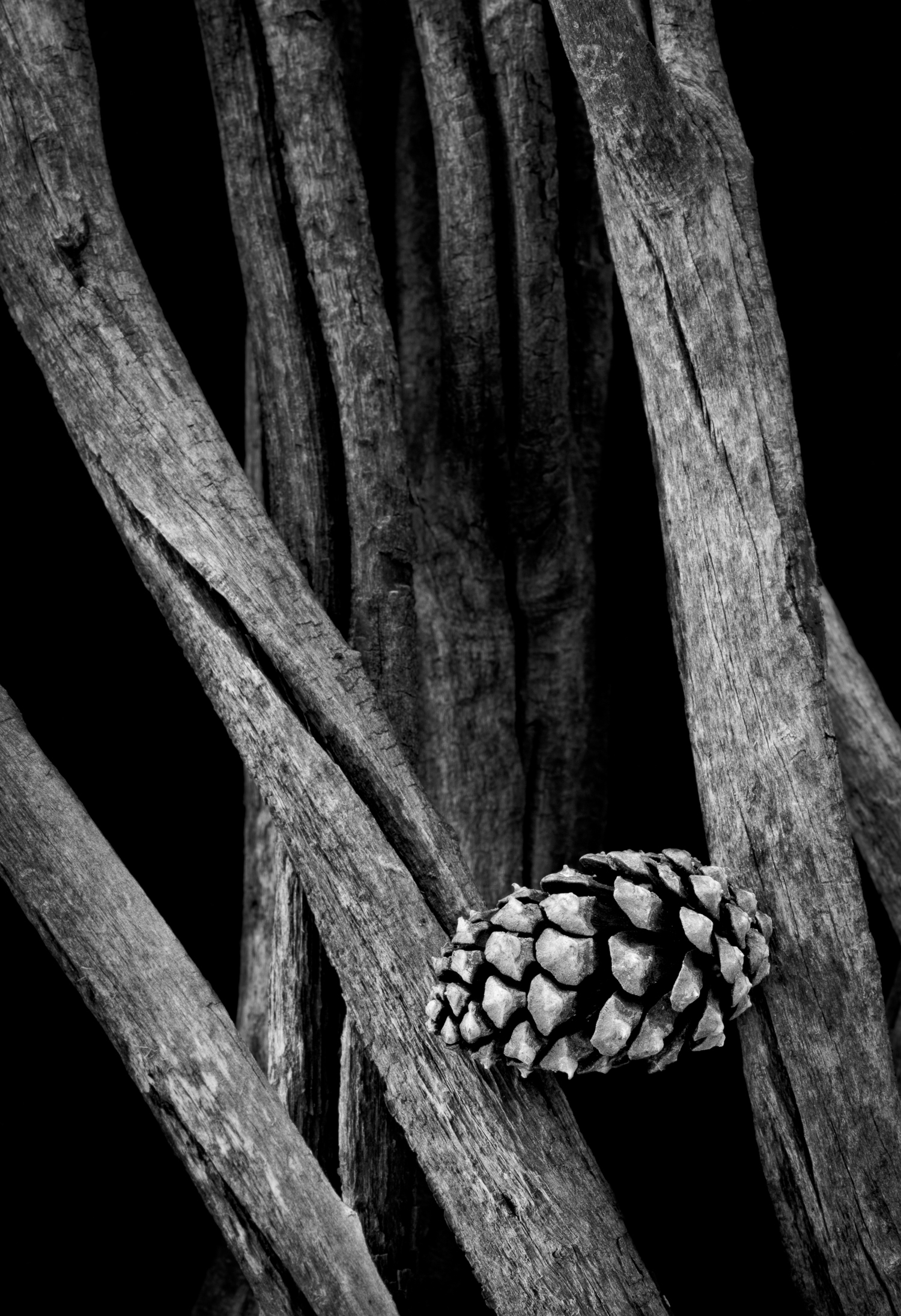 Pinecone and Willow