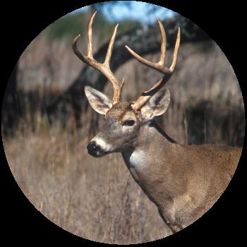 texaslivingrealty_wildlifeexemption