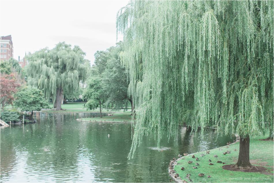 meredith_jane_photography_film_cape_cod_boston__common_public_garden_engagement_wedding_photographer_photo_0561