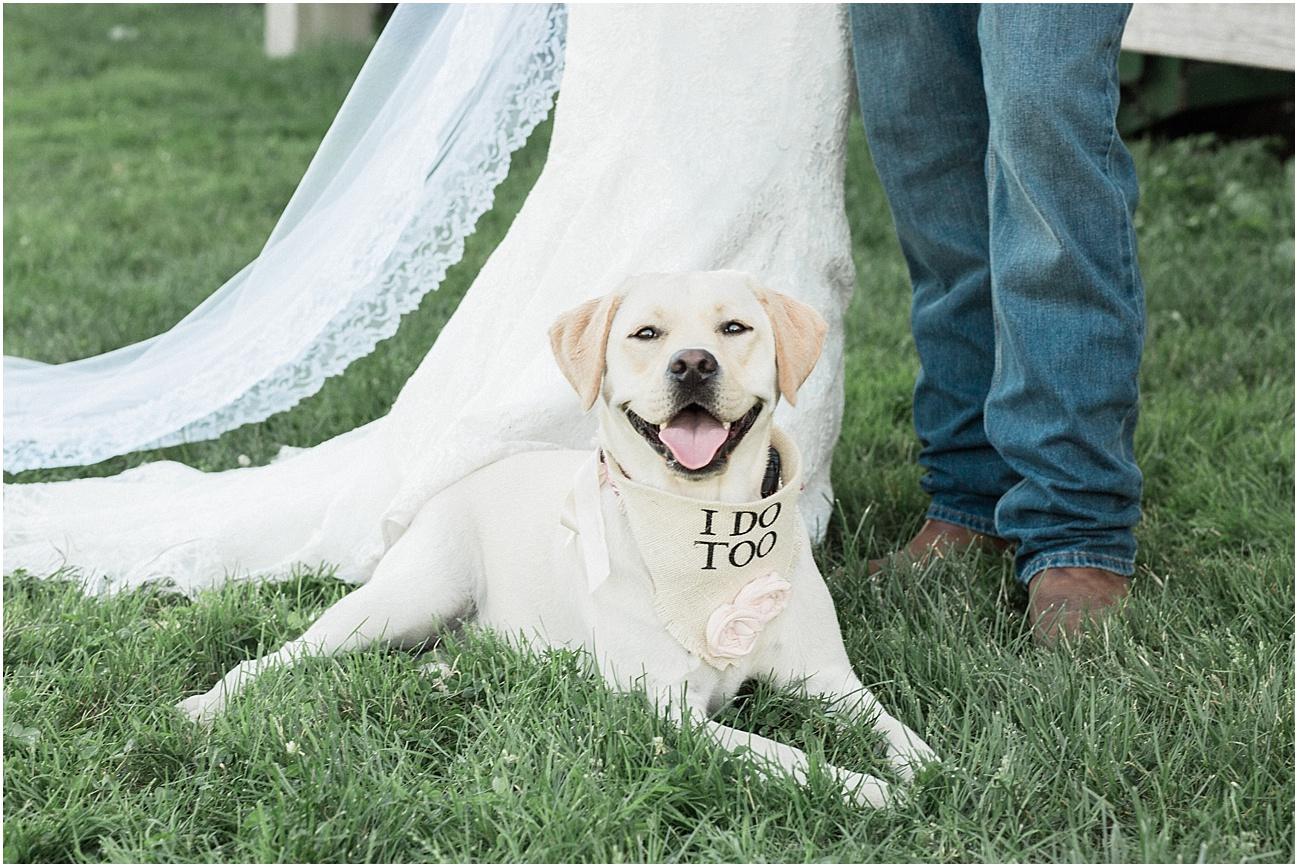 jackie_brad_barn_at_gibbett_hill_country_yellow_lab_fall_burgundy_cape_cod_boston_wedding_photographer_meredith_jane_photography_photo_1043.jpg
