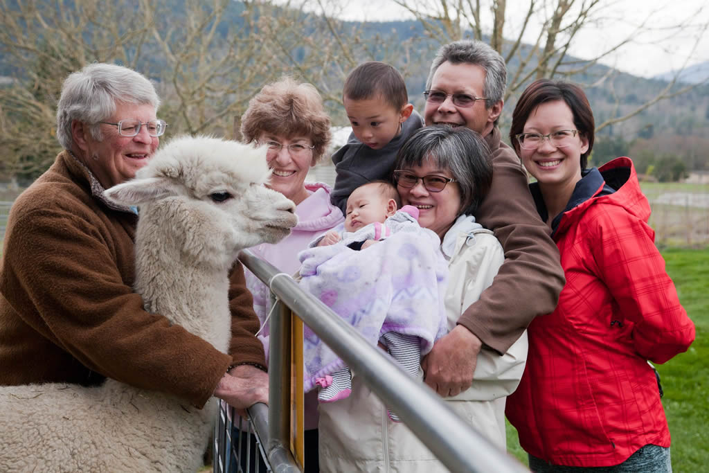 portraits with alpacas by Cindy Marie Photography